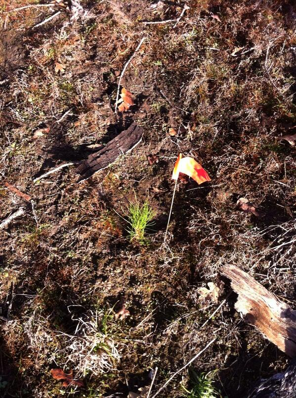 The 1st tree is in the ground. We are helping replant in Bastrop State Park.  #ISFCommCrew http://t.co/iKAgL6n0jG