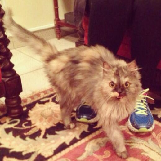 Lost cat found in Yarmouk. Greyish Persian fond of human interaction. Trying to find its owner. Please RT! http://t.co/LerK1YQlBi