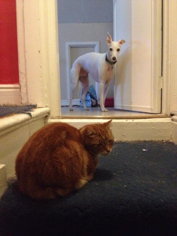 Here is Smith, trapped in the bathroom by Louis. He can not walk past Louis. Louis is a smug bastard. http://t.co/pxo8f0aCjh