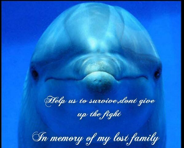 '@petethepunk give these intelligent family oriented creatures cruelty free living #HelpCoveDolphins http://t.co/UX5duTAfS1' #EA ^@Ysabel_03