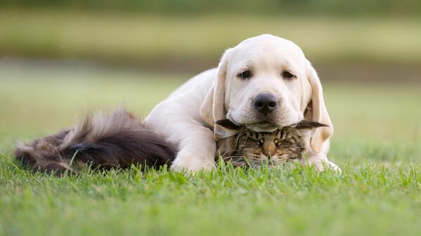 RT @_Paisajes_: !Una buena almohada! http://t.co/4YyRmS1cIL