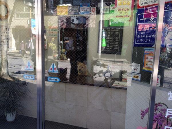 店主、いぬ。 http://t.co/T17FKGhhJ2