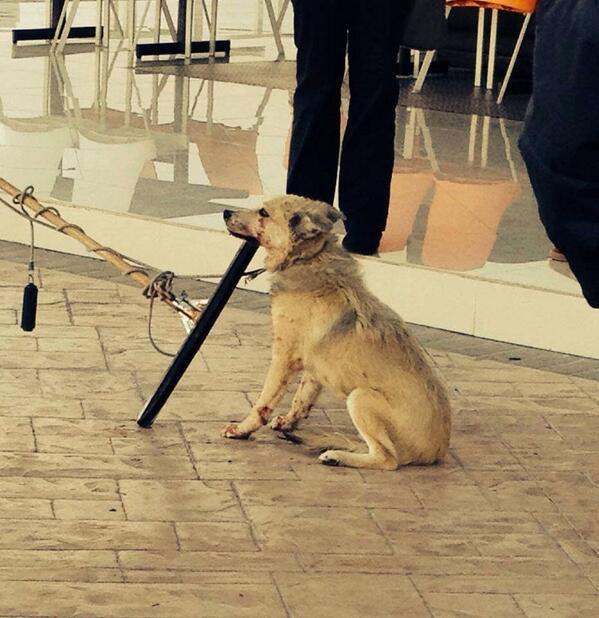 ¡Exijimos justicia para el perro golpeado por personal del #InstitutoBritánico @AyuntTorreon @GobDeCoahuila http://t.co/LelOtEUouo