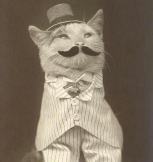 19th century cat is posh. http://t.co/1FKdj5x9pf
