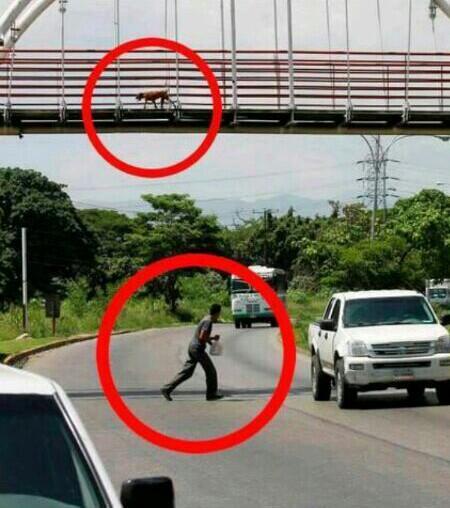 Cosas como estas sólo las vemos en #Venezuela http://t.co/NOjDde296a