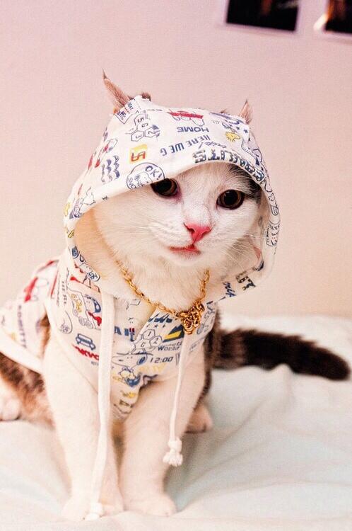 Hoodie Cat! http://t.co/Xqz7vD90fo