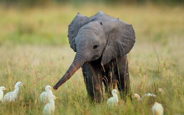 Just a little elephant making friends http://t.co/6ZpGNb4XiM