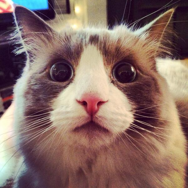 What do you think this cat just saw?  (Image via http://t.co/PF0AijukaF) http://t.co/OcIIQvT3Ib