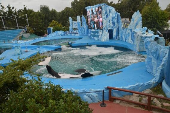 This is Kshemenk, the most abused orca in the world, permanently bent from living in a pool. http://t.co/9vVEzhZlyb