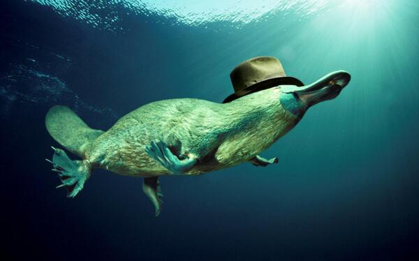 I lost the fight for the platisher image. http://t.co/ARvShl9qJ1 Frankenfruit beat the semiaquatic mammal in a hat. http://t.co/tu7QTdTt40