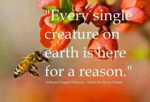 """""""Every single creature on #Earth is here for a reason."""" - Anthony Douglas Williams, Inside the Divine Pattern #quotes http://t.co/ReOdT3Wjlk"""