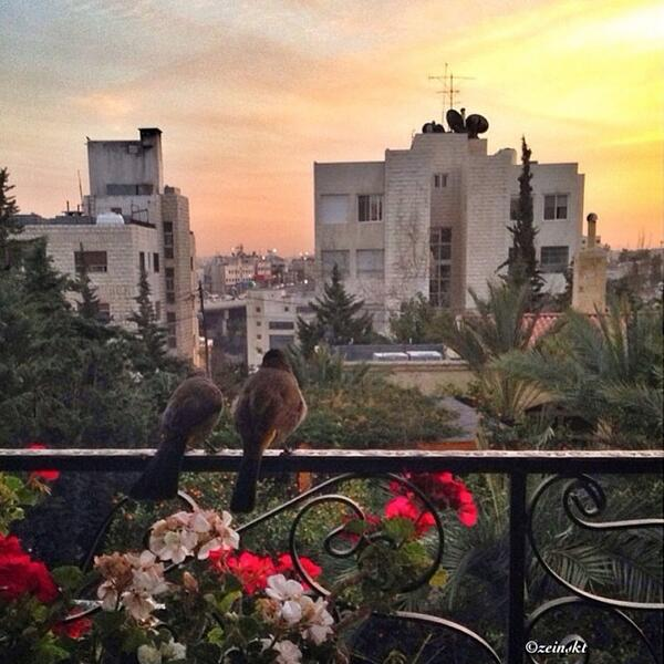 Love birds on an Ammani balcony, with a beautiful sunset view! Thanks to Zein Saket for sharing! #shareyourjordan http://t.co/tz8Bk7X5nM