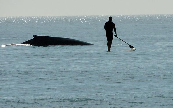 This photo was taken while paddling in NC with a Humpback Whale. Submitted by: Chris Hill #paddleboarding http://t.co/zGpG04kCMt
