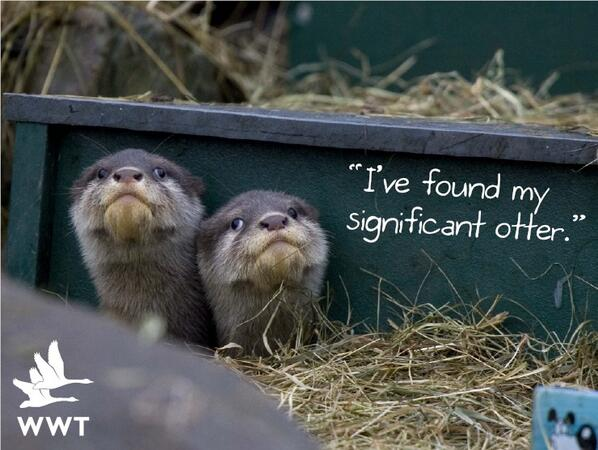 """I've found my significant otter."" Adopt an otter for your loved one this Valentine's Day: https://t.co/irGPiXX8gW http://t.co/nwPh6a2bcx"