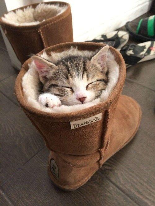 So cute... http://t.co/RRmvGnwHby