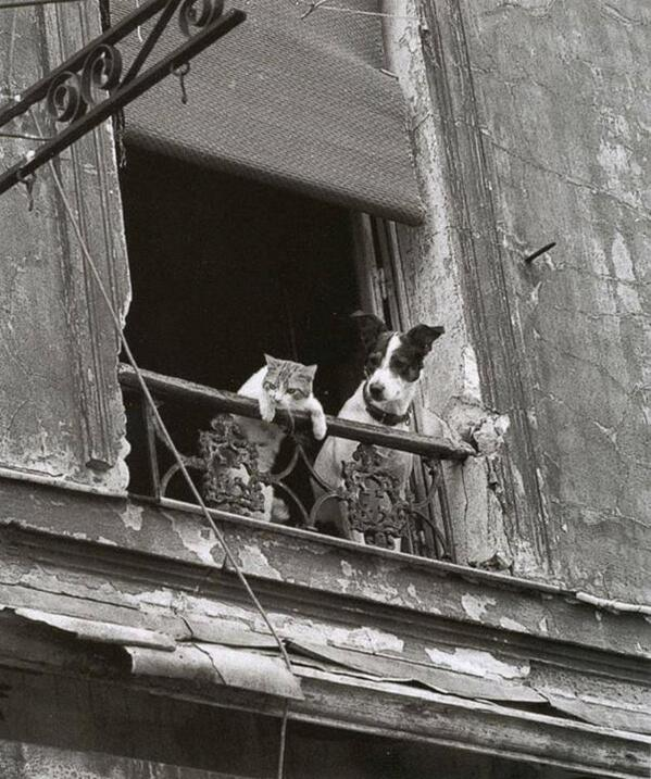 Love this! RT @HistoryInPics: Dog and Cat in Paris. Photograph by Annick Gérardin. http://t.co/VgojSquMxK