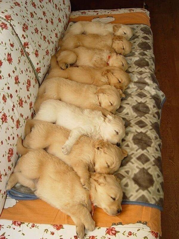 an arrangement of pups napping on a couch http://t.co/knoOujVZH8