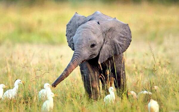 Look at this picture and tell me you're not sad that in a decade, there may not be any elephants left in Africa. http://t.co/gSXd8ieb8I