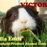 RT @PetaIndia: U DID IT! U helped PETA & MP Maneka Gandhi end household-product tests on animals in India: http://t.co/GlCYxJq1pq.