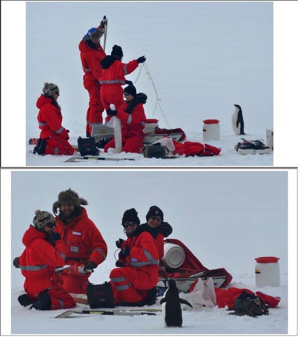 好奇心旺盛すぎるペンギンちゃん。人間見た事ないのかなー。http://t.co/4b2meGWY9c http://t.co/nWPedh1zEo