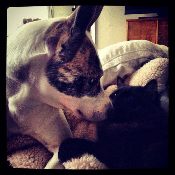 This is the first thing I saw when I opened my eyes- 2 unlikely friends Loving each other :) I LIVE FOR LOVE http://t.co/RhG9Dl3m8P