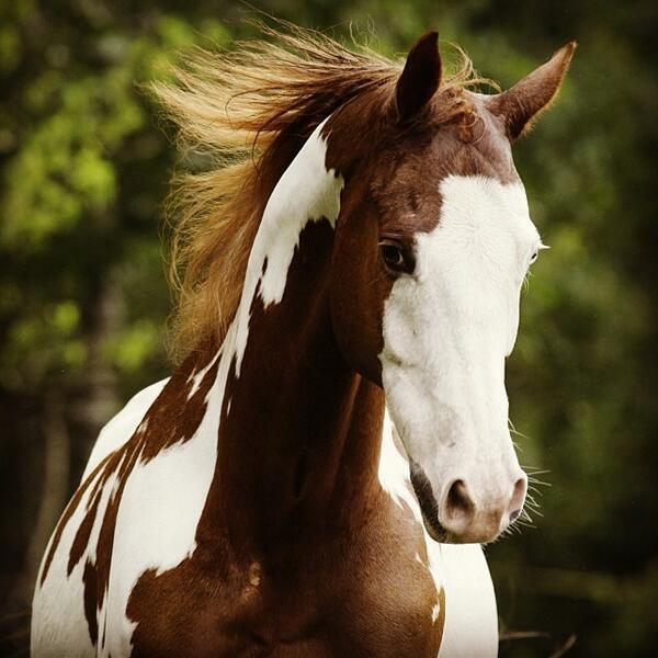 Happy Year of the #Horse! #2014 #Cavalia http://t.co/oPk0UIqnHm http://t.co/GtT7KgEK62