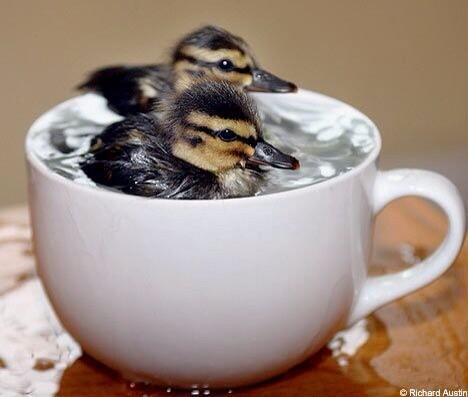 #cute http://t.co/5XuCpU5BLk