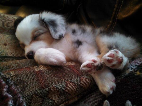 Takin a nap http://t.co/ixrLWDsu1t