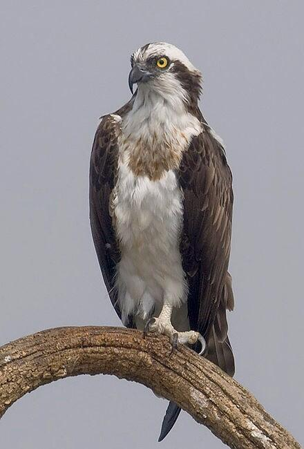 Can't believe how chill this Seahawk is about the Super Bowl http://t.co/GNXmyL2ifD