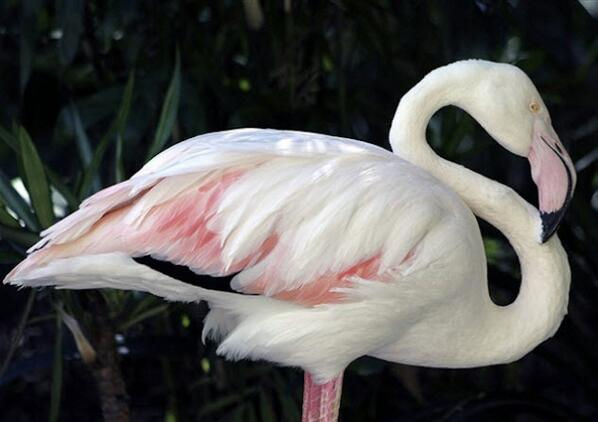 The world's oldest known flamingo has died at the age of 83.  http://t.co/Rc8xDXILxt http://t.co/J87YpV6NnM