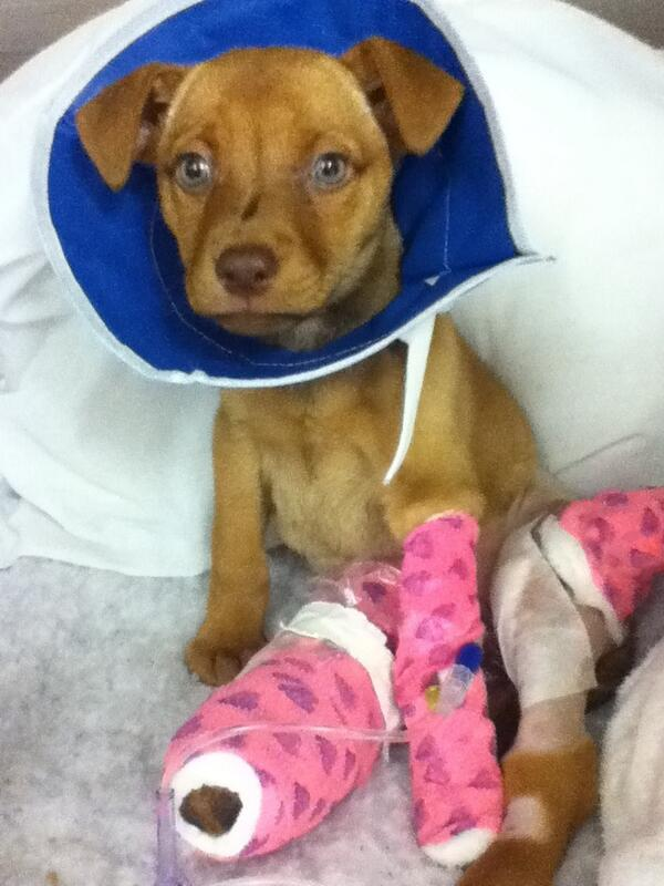 Bella is recovering after she was seriously injured during a domestic violence incident: http://t.co/ElTIg7ievr http://t.co/wUt9cATPpZ