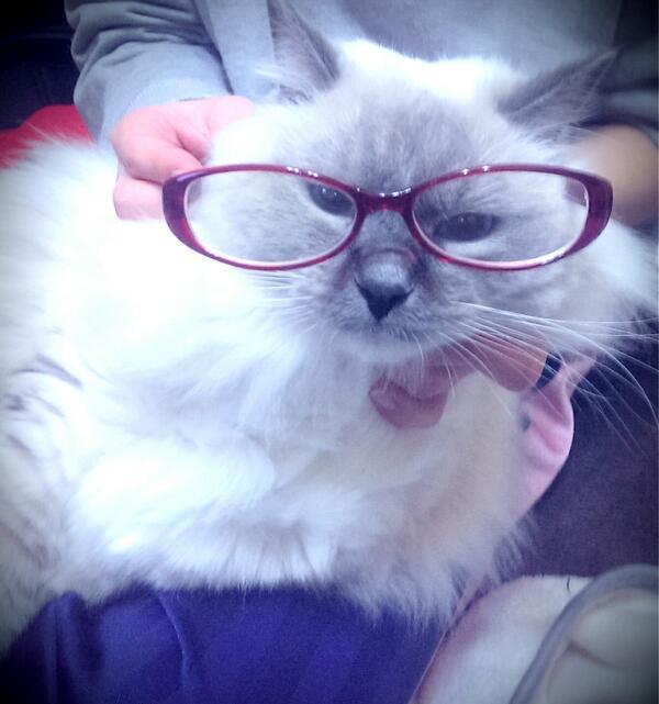 うちの猫ぶさかわになった http://t.co/zBLgYD76pf