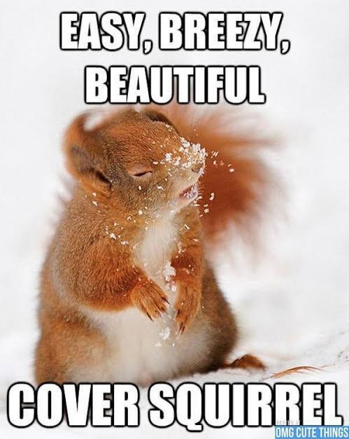 """""""Cover Squirrel!""""  From Cuteporter Katie F. http://t.co/0pZ9UAM2qr"""