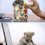 RT @ThatsEarth: Baby Koala rescued after getting lost. http://t.co/H181BaaAMZ