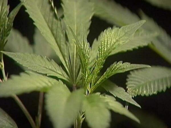 "Florida's first ""Marijuana University"" opens in Tampa http://t.co/bTMjof19Uk http://t.co/aI2O2lvInA"