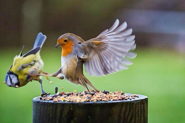Птичья Спарта) http://t.co/mKIhUpEXMP