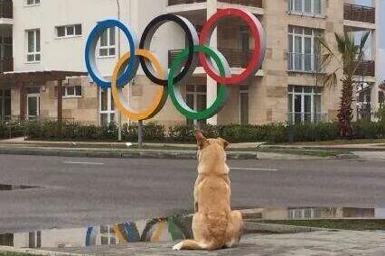 The mass killing of stray dogs is not, and never will be the answer http://t.co/FPryhGU4ug #sochi #SochiProblems http://t.co/n61IcfBYWR