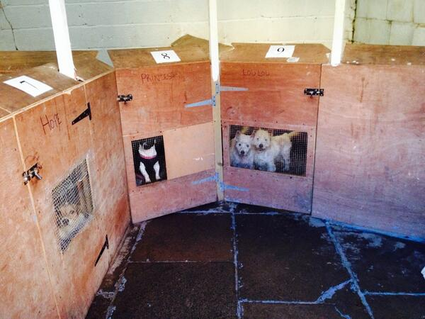 Shocking pictures from a puppy farm raid in Durham this morning @pupaid http://t.co/lxqRITjcHW