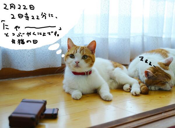 そうにゃ! 2月22日2時22分にみんにゃで、「にゃー」とつぶやいてみるにょです!にゃー!!!  #猫の日 http://t.co/vFkDsUq3Sw