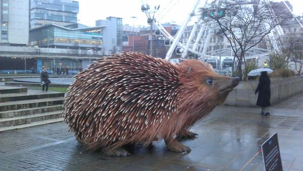 Giant hedgehog appeared in Picadilly Sq this morning. @BBC @Bruntwood_UK , must take a few berries for lunch. http://t.co/iOwGYSxqtN