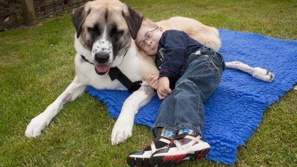La increíble amistad entre un niño enfermo y su perro de tres patas > http://t.co/UlUOFuLwGD http://t.co/84Hi9k5Zcb