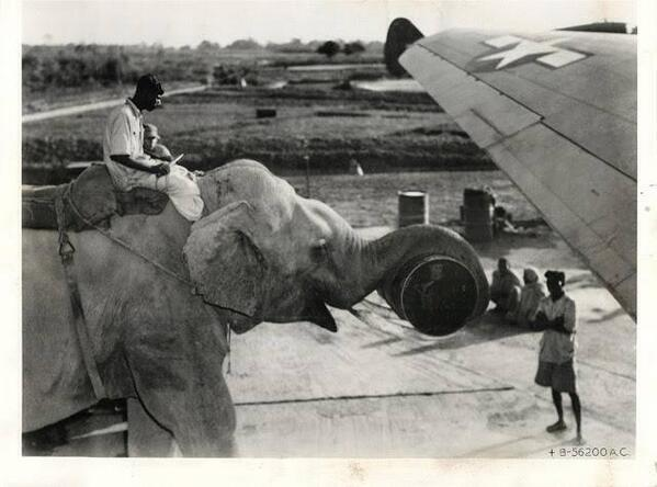Elephants Loading Supplies in C-46 Planes during Second World War in India, US Army Photograph, 1940. http://t.co/5luAhxSL8S