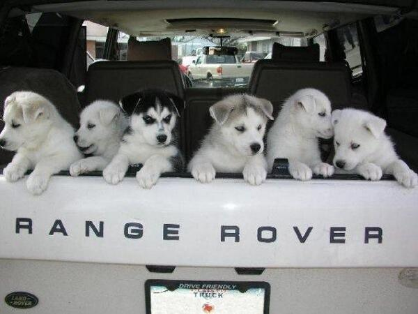 Today is National Love Your Pet Day. Where did you drive your furry friend in your #LandRover today? http://t.co/Ph7IWMUvTd