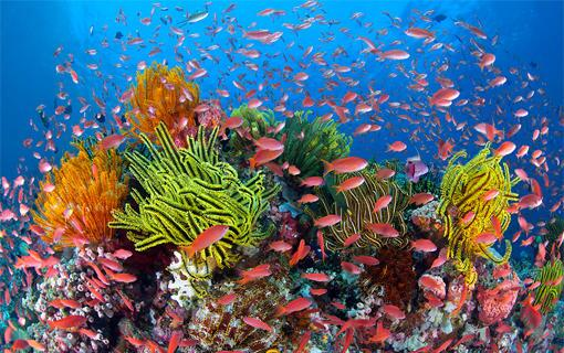 One of the most beautiful sites in the world is underwater! Have you ever been to the great barrier reef? http://t.co/qvow0dpQos