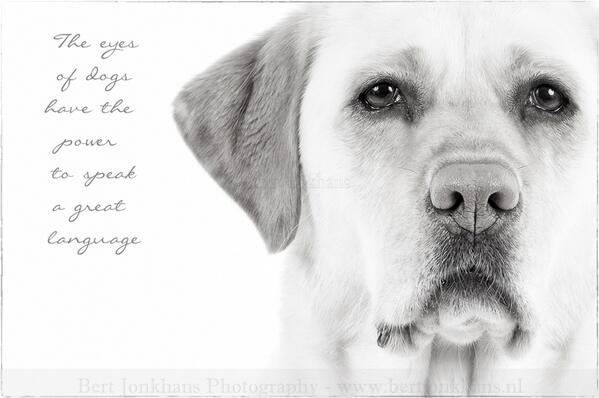 Indeed. RT @BertJonkhans: The eyes of dogs have the power to speak a great language @iLoveDogsInc @fieldfarefoods http://t.co/Wua5rjbMNB