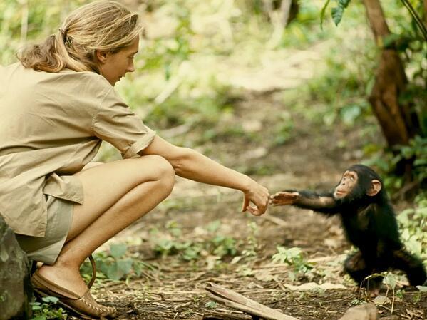 RT @JotDownSpain: Jane Goodall, Tanzania, 1964 (by Hugo van Lawick) http://t.co/01HYuNEtpr