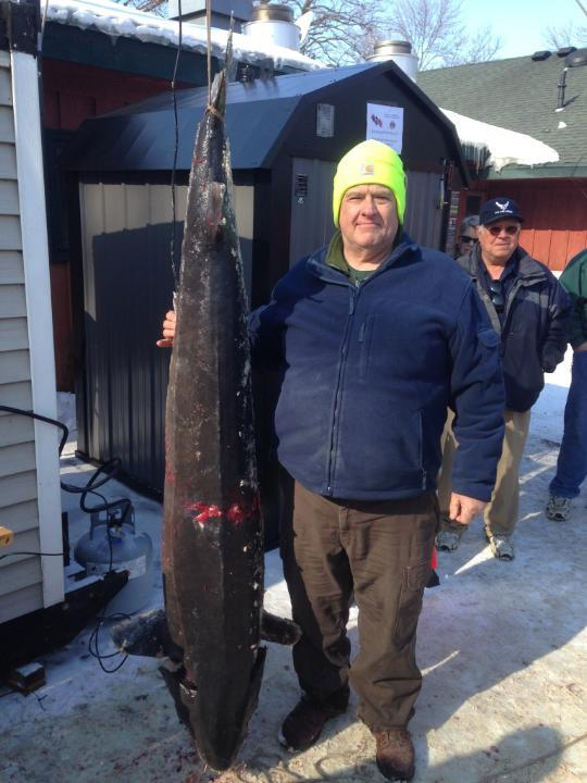 """Biggest fish thus far registered in pipe. 148.0 pounds, 74.6"""" http://t.co/jqzvGQ1G1P"""