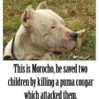 For Pit Bull lovers & to those that don't understand the breed #GreatDogs http://t.co/fTfOTbIJBf