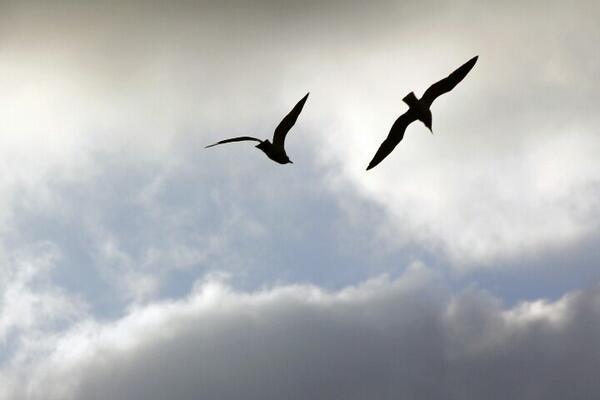 """@picasso_park: 하늘에서의 대화.... 굿모닝~ ^^ #dicadong #제주 http://t.co/osRzOvX9tb""굿모닝(손번쩍)요~^^"