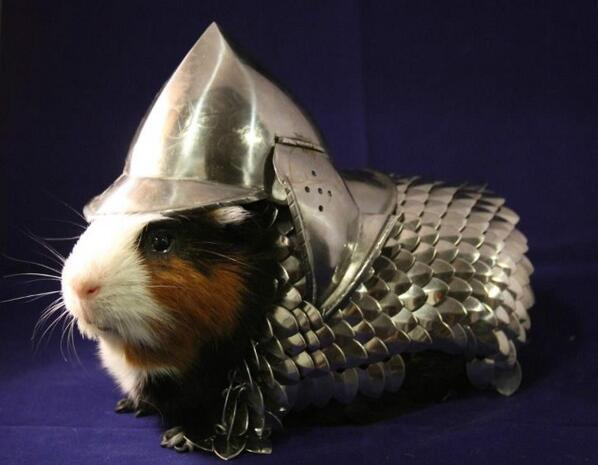 Hand-made Guinea Pig Scale-Mail and Helmet (Armor) ~ mightys0x #cute #steampunk http://t.co/9mdyaIxVAr